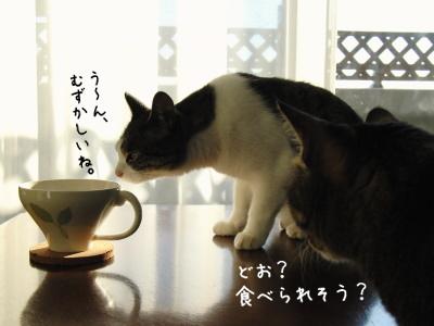 紅茶鑑定者たち