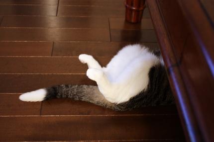 テーブル下から脚