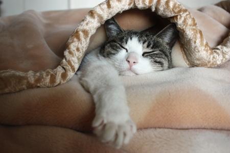 二度寝、入りました