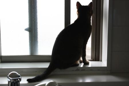 風を見る猫