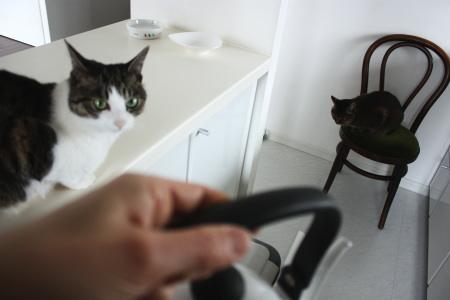 猫G、待機