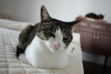 猫もためいきをつく