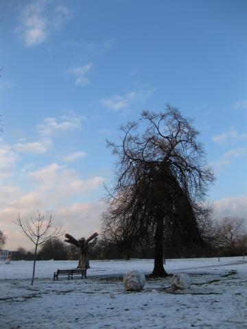 面白い形の木。