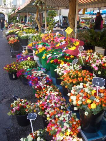 鮮やかな花たち