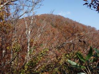 s11糸岳山頂