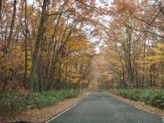 s13黄葉の道2
