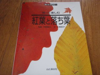 s紅葉と落ち葉