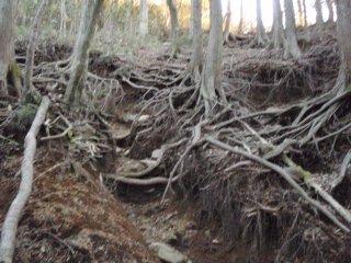 s木の根のジャングル