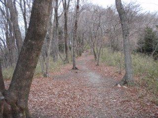 穏やかな森