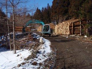 s04伐採作業中2