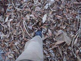 s落ち葉の吹き溜まり3
