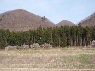 s11たがら森と遂倉山
