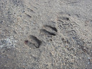 s01シカの足跡
