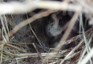 mスズメの巣の中5