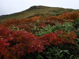 20090928栗駒山