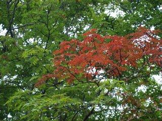 s02ナナカマドの紅葉