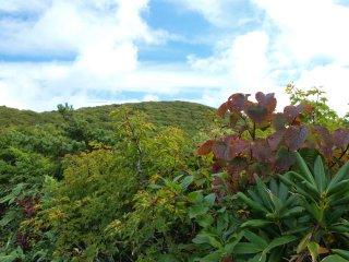 s12蛇ヶ岳山頂方面2