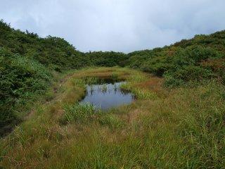 s14池塘