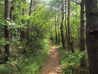 s06登山道2