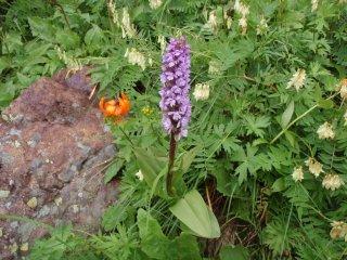 s紫の花3
