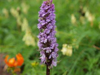 s紫の花1