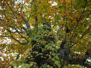 s04色とりどりの木