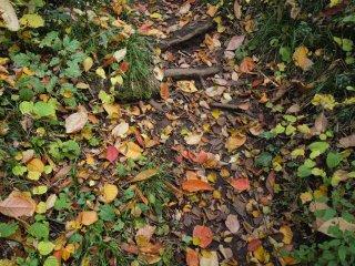 s02色とりどりの落ち葉