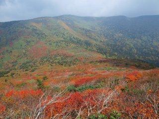 s08小畚岳までの紅葉15