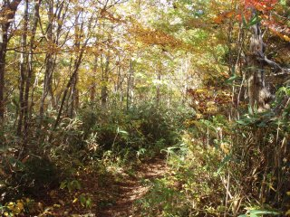 s17明るい樹林