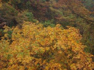 s14橋の上から黄葉2
