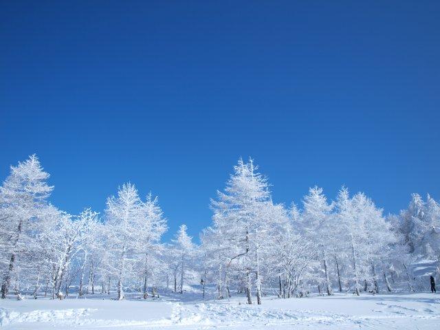 s青空と樹氷2