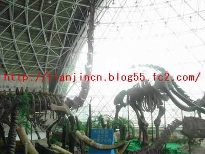 天津自然博物館4