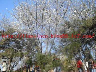 玉淵潭公園6