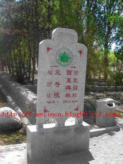 西夏王陵4