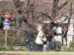 07/04/04 サクラ標準木