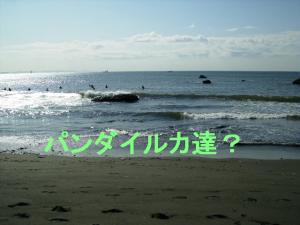 P5060699.jpg