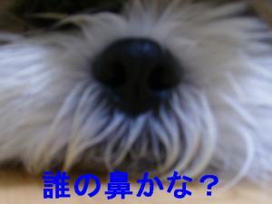 P5100764.jpg