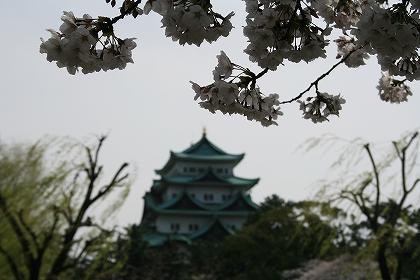 21-4-5 sakura in nagoya 015