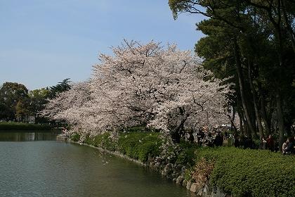 21-4-5 sakura in nagoya 006