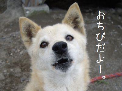 おちび通信7-1