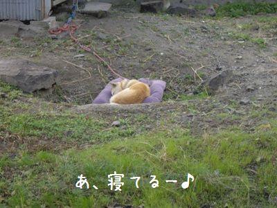 寝坊おちび1