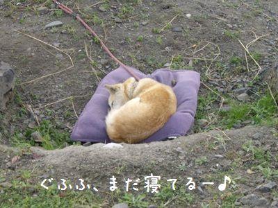 寝坊おちび2