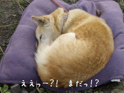 寝坊おちび4