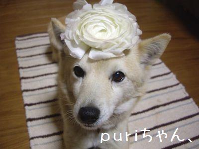 puriちゃん2