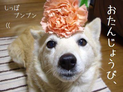 puriちゃん1