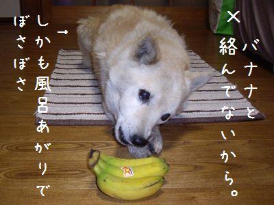 ボツバナナ1