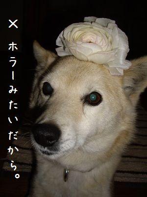 ボツpuriちゃん