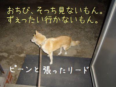 犬が違う4