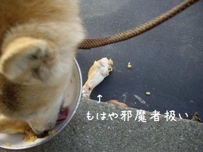 半生肉ご飯4