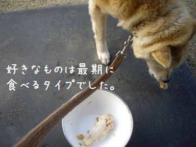 半生肉ご飯5